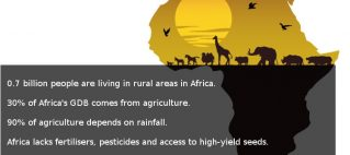 Agriculture in Africa: Potential versus reality